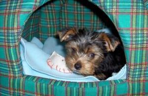 Celebrity Miami dog trainer