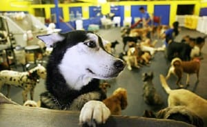 Doggie Daycare Los Angeles CA