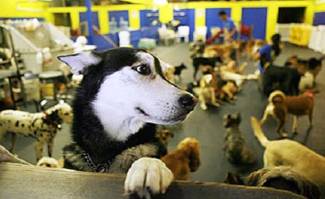 Doggie Daycare Los Angeles CA