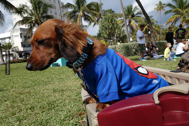 Dog Training in Miami (72)