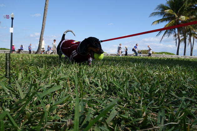 Dog Training in Miami (9)