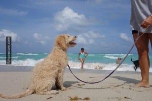 Beach Dog Training Classes, Miami Photo - Fun Paw Care