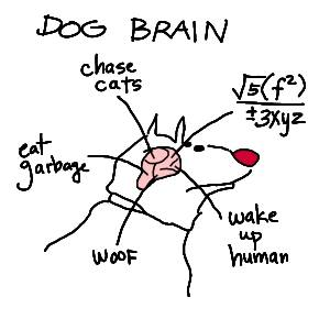 Miami Dog Training Brain