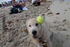 Tennis ball hits dog in the head