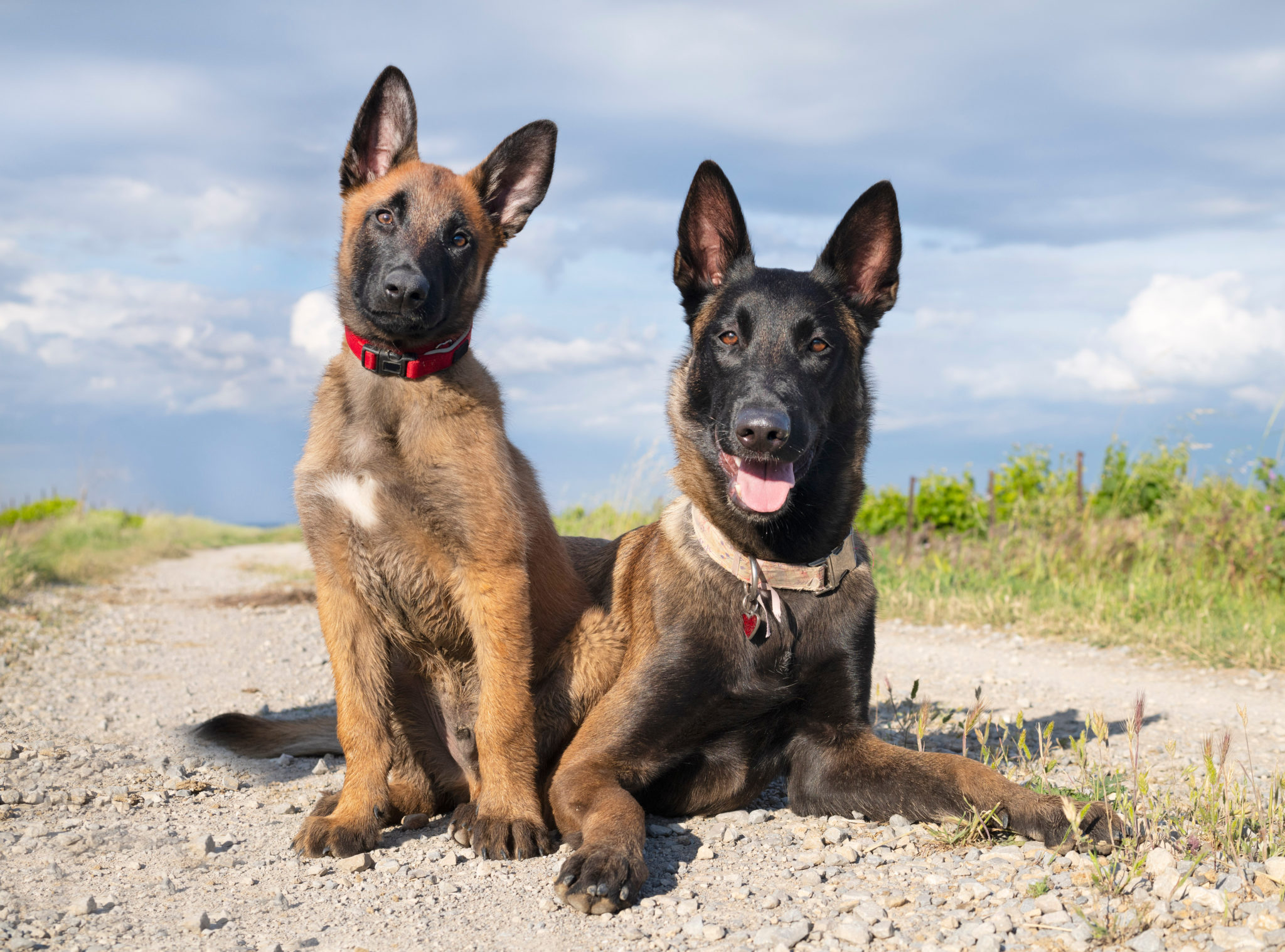Best puppy & dog trainer Los Angeles CA German Shepherd