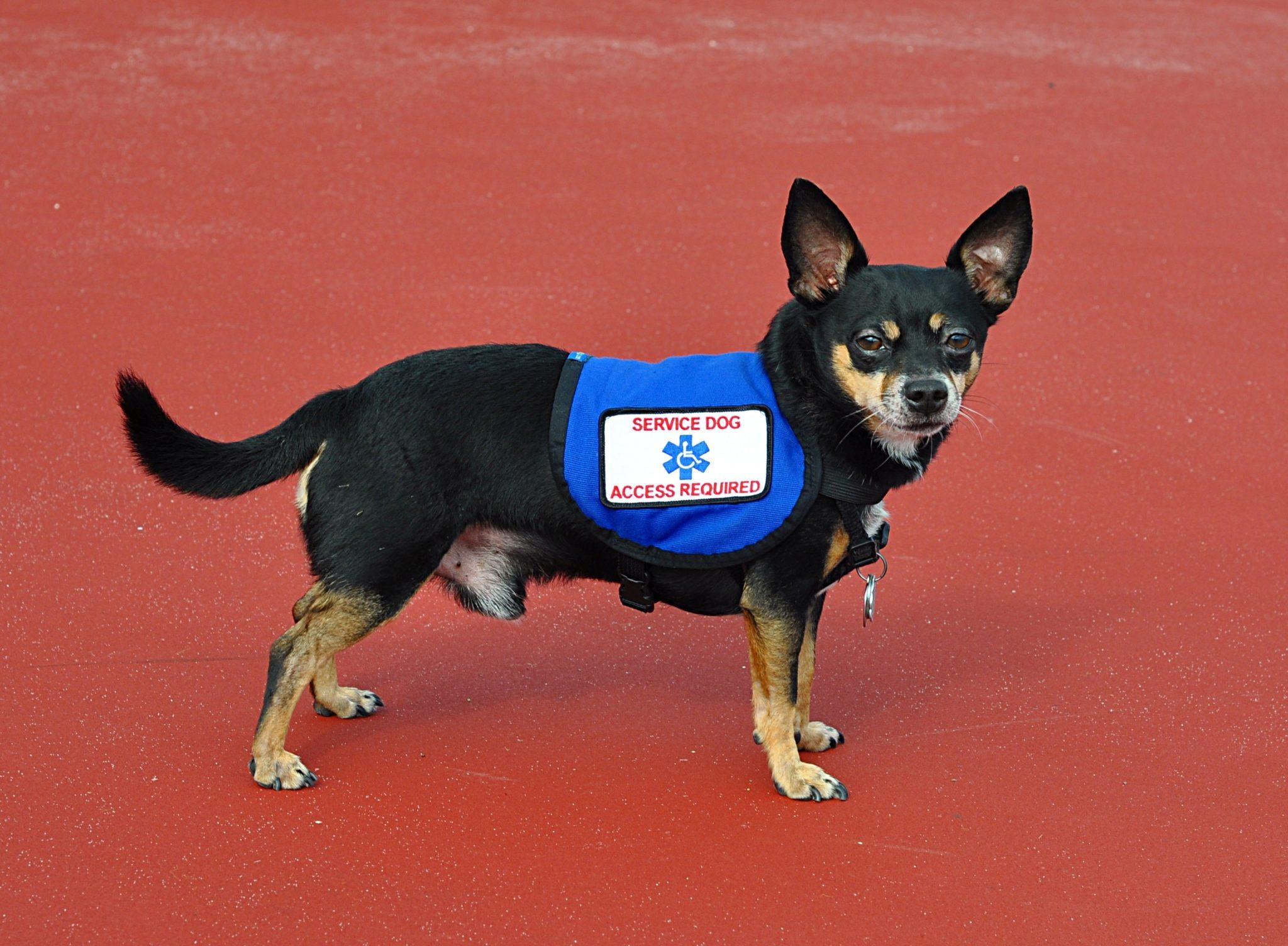Best Service Dog Training Los Angeles California